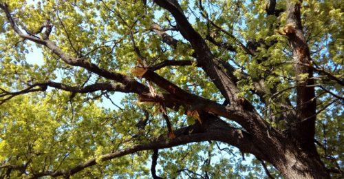 Uno degli alberi danneggiati