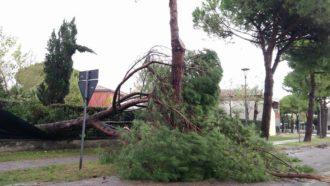 Albero Caduto Marina Di Ravenna