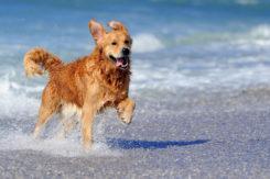 Cane In Spiaggia Mare