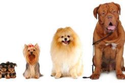 Evidenza Mostra Canina Sfilata Cani 640x400