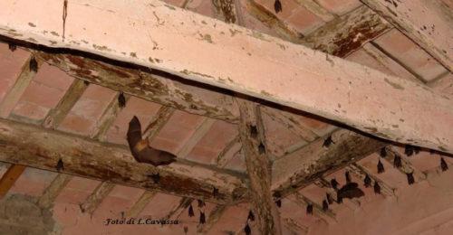 Foto Pipistrelli