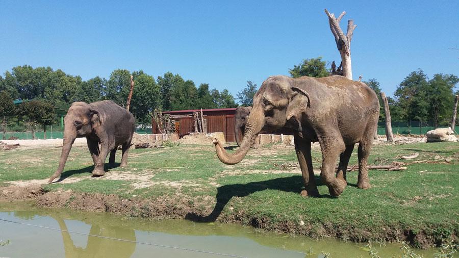 Elefanti Safari