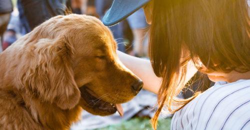 LASCITI Animali Domestici (2)
