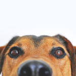 Adorable Animal Blur 406014