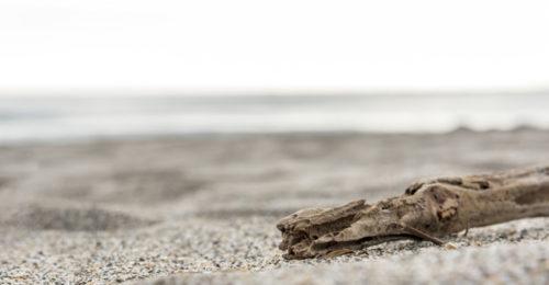 legno sulla spiaggia