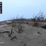2019 04 04 Passerella Nord Tra Le Dune4