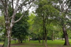 Parco Via Nizza Foto 2