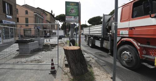 Il pino tagliato di via Maggiore