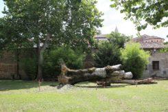 Parco Cappuccine Albero Caduto