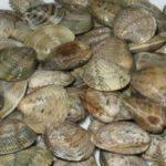 Salve Poveracce Pesca Rimini Ravenna