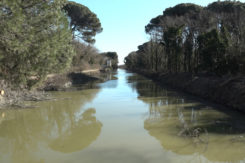 Pineta San Vitale Canale Cerba