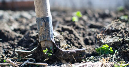 Agriculture Backyard Blur Close Up 296230