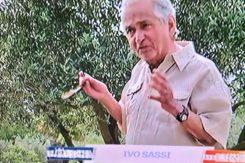 Ivo Sassi