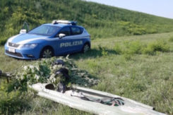 Marijuana Santerno Polizia