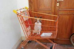 Cagnolino Abbandonato