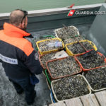 controlli pesca guardia costiera ravenna