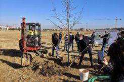 Primo albero parco Cesarea di Ravenna