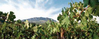 Vini San Marino